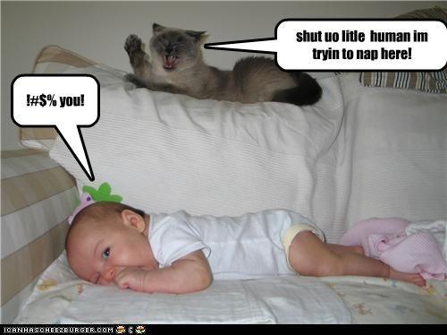 shut uo litle human im tryin to nap here! !#$% you!