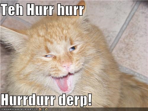 cat Caturday critters pet - 3924290048
