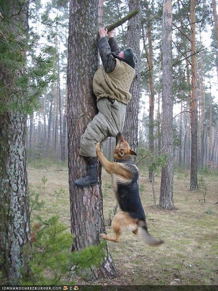 animals captionable funny military soldier - 3924637440
