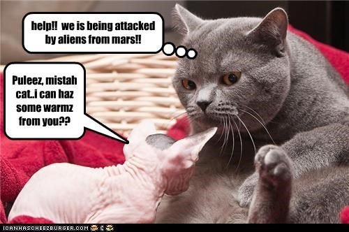 Puleez, mistah cat..i can haz some warmz from you?? help!! we is being attacked by aliens from mars!!