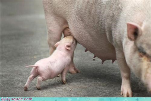 Om Nom Monday pig piglet - 3926851584