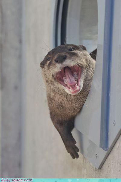 face otter smile