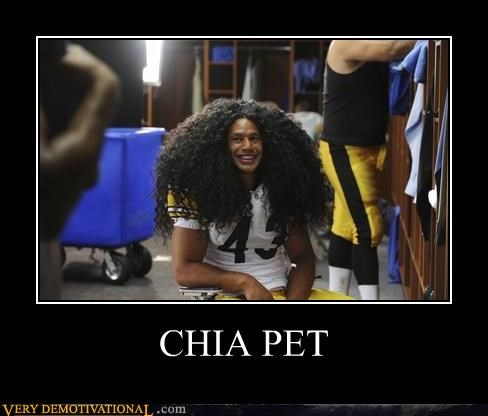 hair,wtf,chia,pet,football