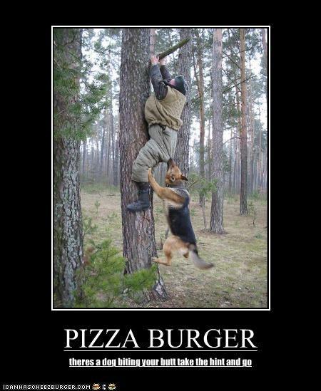 Cheezburger Image 3927571968
