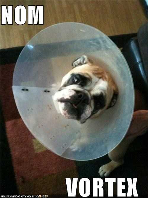 bulldog cone of shame creativity noms pragmatism vortex - 3928014592
