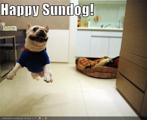 costume flying french bulldogs happy sundog superdog - 3928227328