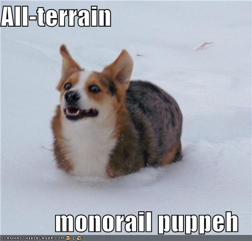 all terrain dogs mixed breed monorail puppeh snow whatbreed - 3928501504