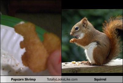 popcorn shrimp,squirrel