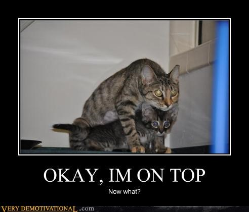 cat,on top,sexy times