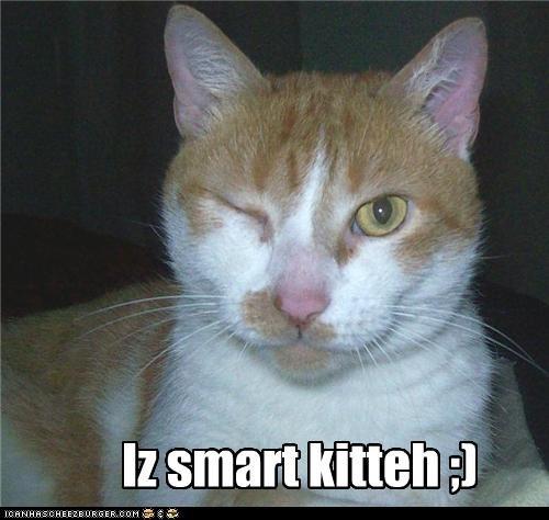 Iz smart kitteh ;)