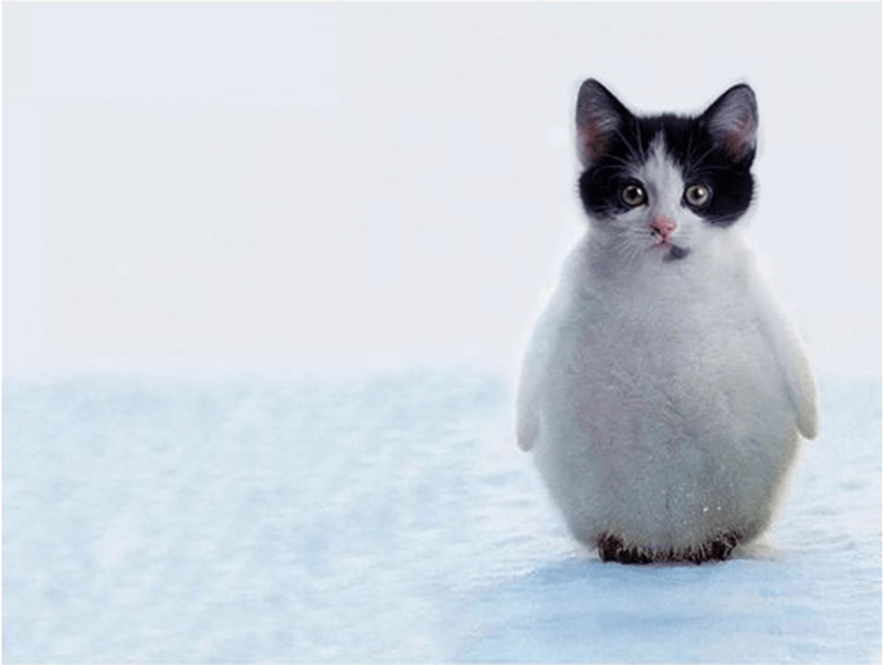 a list of adorable hybrid animals