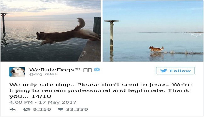 twitter weratedogs rating dog pics
