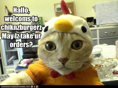 Cheezburger Image 3930831616