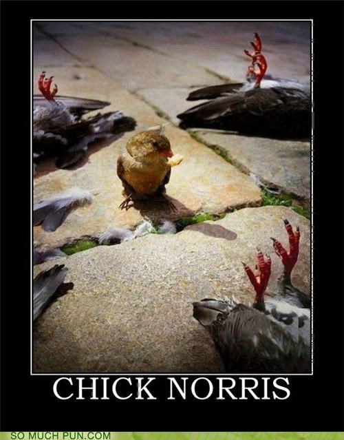chicken,chuck norris,cute,karate,puns,violent