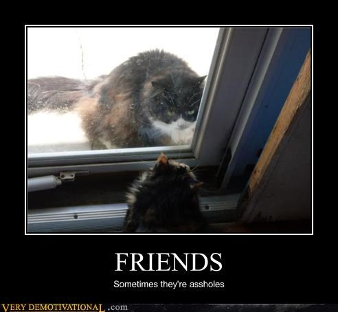 cat,friends,outside,jerks