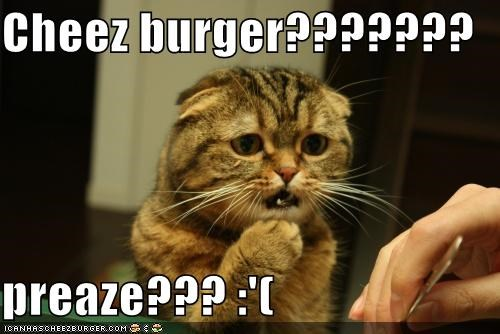 Cheezburger Image 3931665408