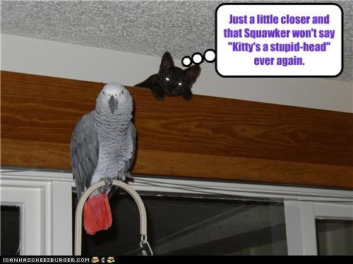 bird,caption,captioned,cat,little closer,name calling,never again,stupid-head