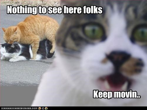 caption captioned Cats crisis keep moving nothing to see here suggestive poses surprise