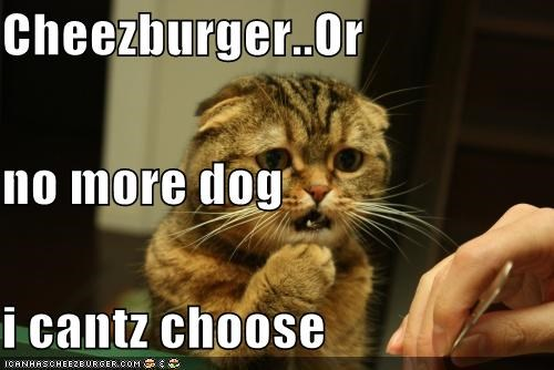Cheezburger Image 3933383424