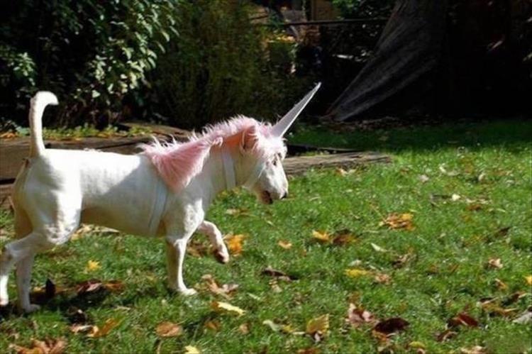 weird animal photos