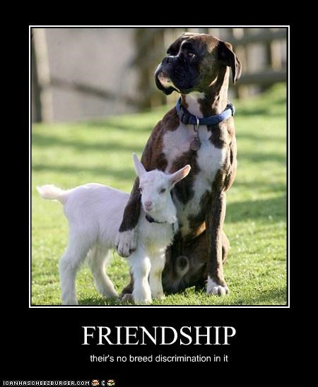 FRIENDSHIP their's no breed discrimination in it