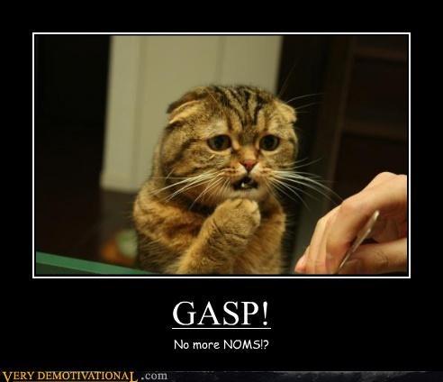 Sad cat noms - 3934300672