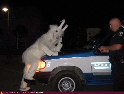cop drunk furries galloping goat wtf - 3936078592