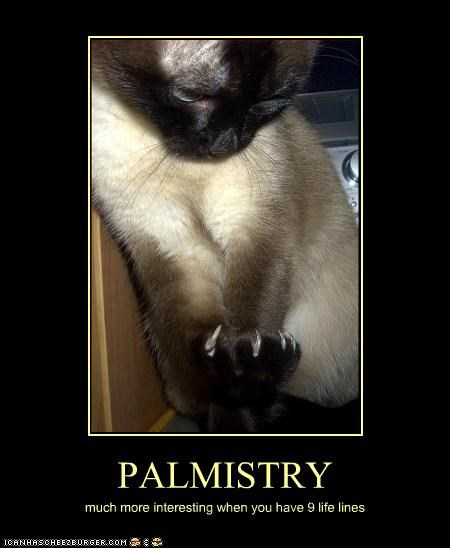 9 captioned interesting life life lines lines lives more much nine palmistry siamese - 3936344064