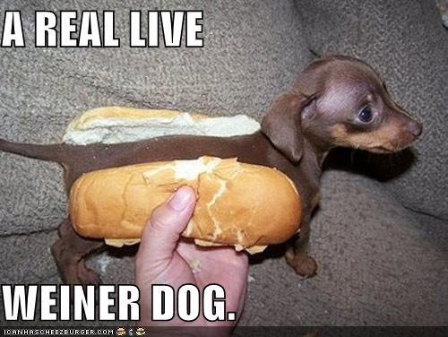 Cheezburger Image 3936628736