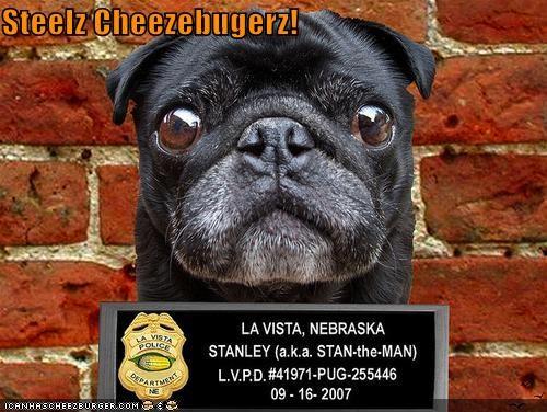 Cheezburger Image 3937100544