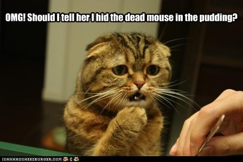 Cleverness Here OMG! Should I tell her I hid the dead mouse in the pudding?