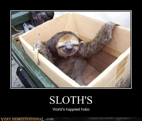 animals,card board box,cute,happy,hobo,homeless,Sad,sloths
