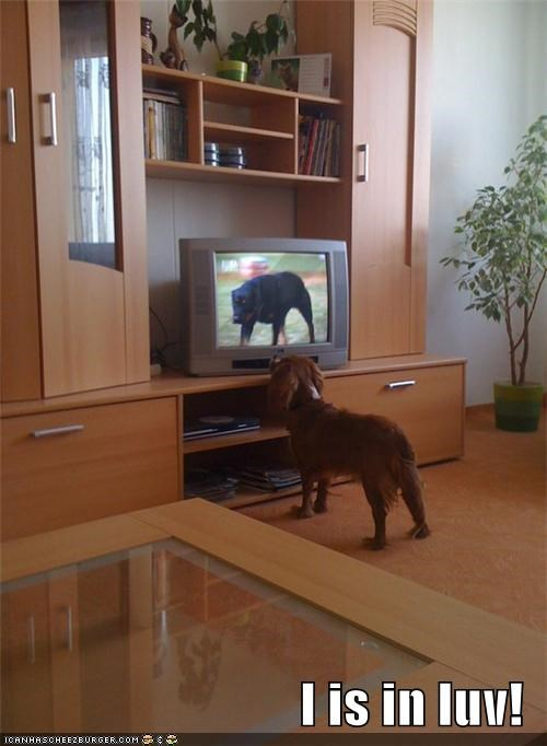 Cheezburger Image 3938101504