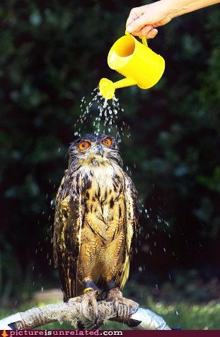 animal-non-human baths Owl rain wtf