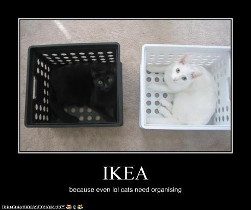 black,caption,cat,crates,organizing,white