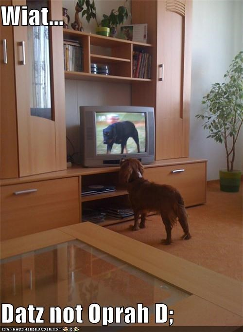 Cheezburger Image 3938501376