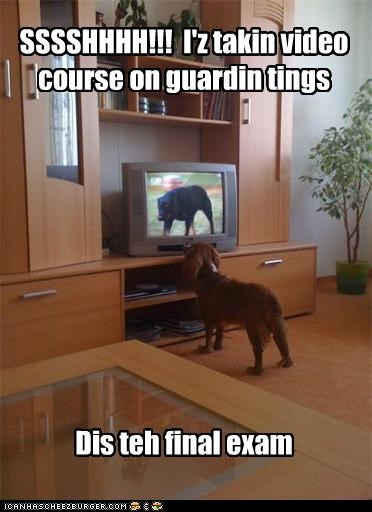 cocker spaniel guarding quiet rottweiler television training video course - 3938573312