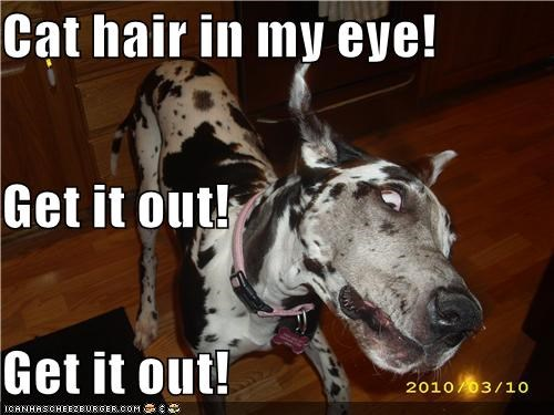 cat hair dalmation derp face eye get it out sensation stuck unpleasant