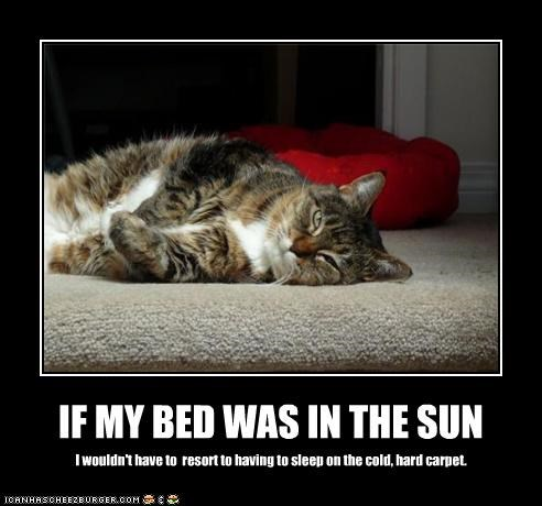 IF MY BED WAS IN THE SUN I wouldn't have to resort to having to sleep on the cold, hard carpet.