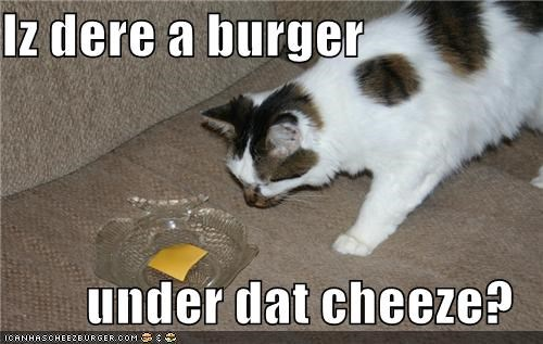 Cheezburger Image 3939522304