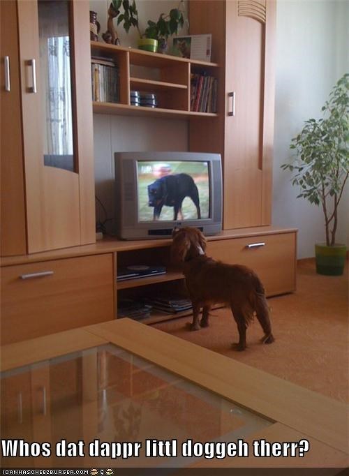 Cheezburger Image 3939631104