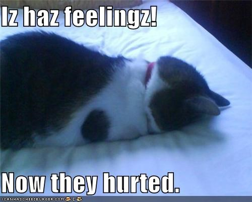 bed buried caption captioned cat feelings head hurt - 3939846144