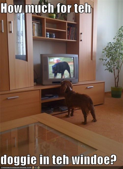 Cheezburger Image 3940194560