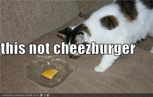 Cheezburger Image 3940230144