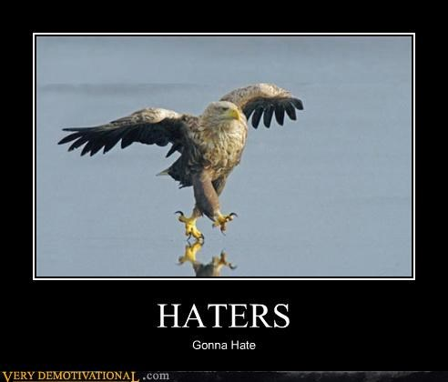 animals anthropomorphism eagles hate haters hilarious - 3940280064