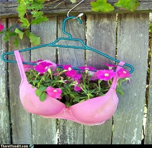 bra garden Kludge potted plant underwear