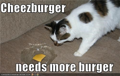 burger,caption,captioned,cat,cheez,cheezburger,needs more,noms,suggestion