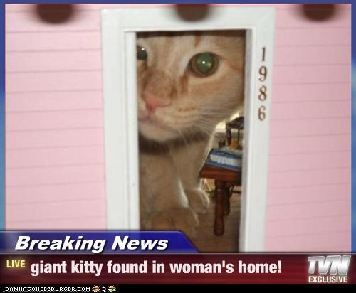 Breaking News Giant Kitty Found In Woman S Home Cheezburger