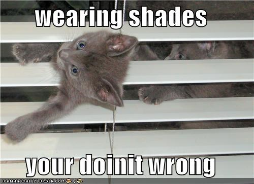 blinds caption captioned doing it wrong kitten pun shades - 3941395200