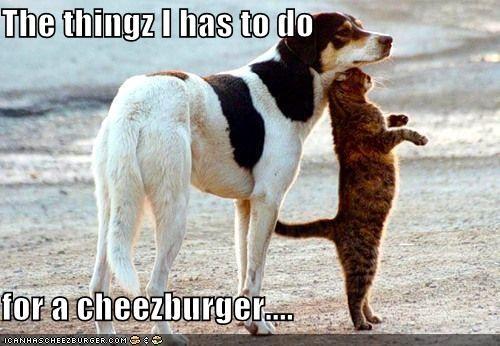 Cheezburger Image 3941437952